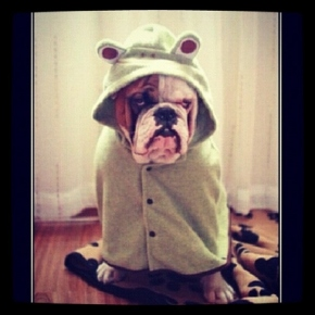 41 dogs who are ready for hurricane sandy and a tokenelephant