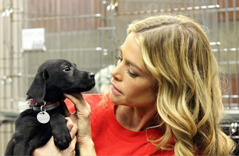 denise richards hurricane sandy dog