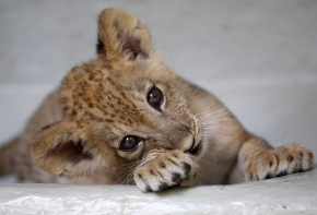45 Most Lovable Baby Animal Pictures